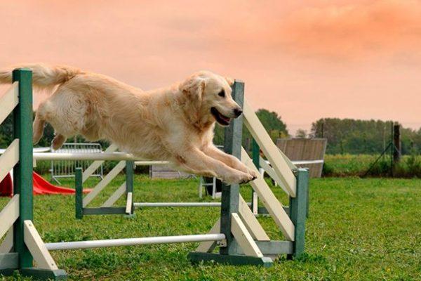 Nuevo parque canino zona norte Tres Cantos